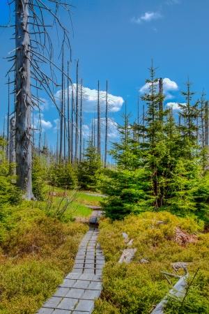 pflanzen: Dying forests in the Bavarian Forest on the Lusen. Waldsterben im Bayerischen Wald auf dem Lusen Stock Photo