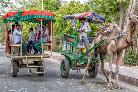 fatehpur: Camel taxi for tourists in Fatehpur Sikri, India