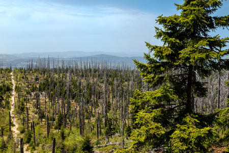 acid rain: Dying forests in the Bavarian Forest on the Lusen Stock Photo