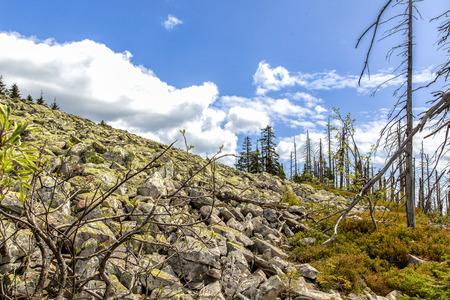 kwaśne deszcze: Umierające lasy w Lesie Bawarskim na Lusen