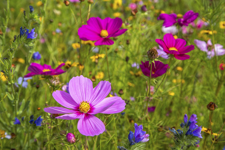 colorful daisies in grass field Stock Photo