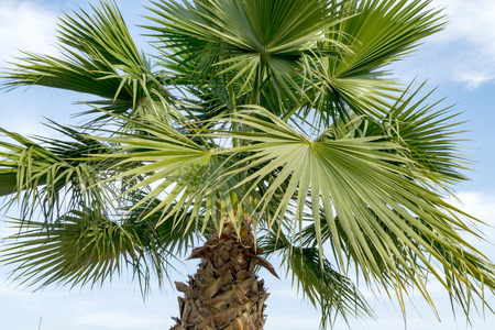 Palm tree against blue sky in Dubai Stock Photo