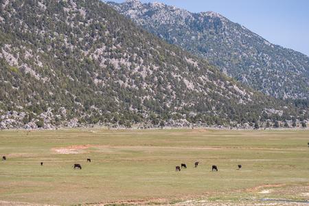 Plateau in the Taurus Mountains in Turkey Standard-Bild - 100750839