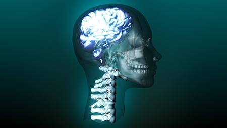 intellect: animazione altamente dettagliata di un cervello umano Archivio Fotografico