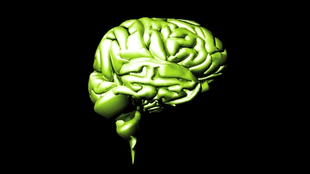 highly detailed animation of a human brain Stock Photo - 10075836