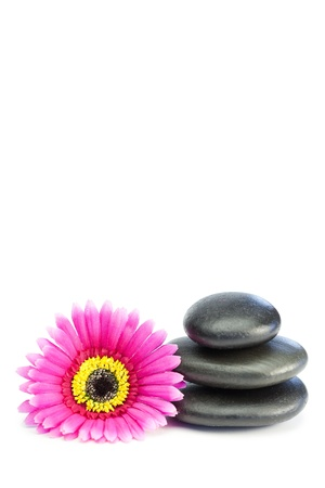 Pink and yellow flower touching piled up pebbles on a white background photo