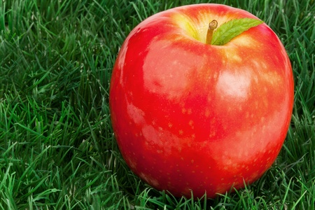 Red apple and its leaf on grass photo