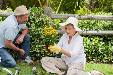 Mature couple working in the garden photo