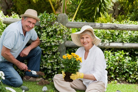 home garden: Mature couple working in the garden