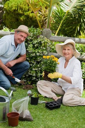 Mature couple working in the garden Stock Photo - 10206551