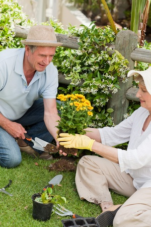 Mature couple working in the garden Stock Photo - 10206446
