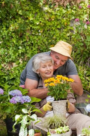 Senior couple working in the garden photo