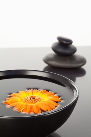 Orange gerbera floating on a black bowl and a stack of black pebbles photo