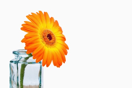 Close up of an orange sunflower in a glass flask photo