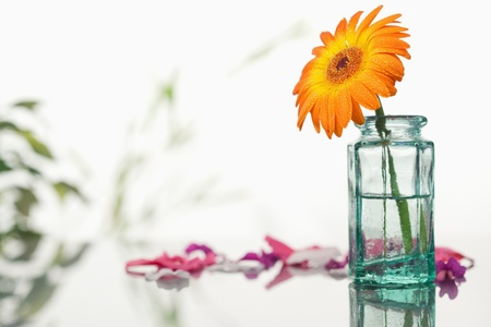 Orange gerbera in a glass flask with pink petals and leaves focus on the flask and the flower photo