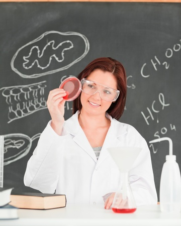 Cute scientist looking at a petri dish in a classroom Stock Photo - 10220142