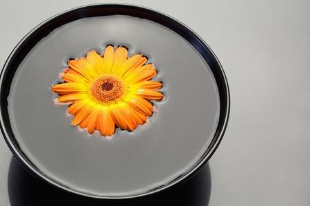 Gerbera naranja flotando en un tazón negro Foto de archivo - 10074660