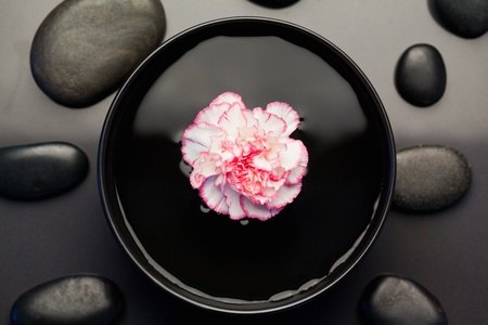 Pink and white carnation floating in a black bowl surrounded by black stones photo