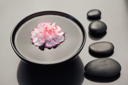 Pink and white carnation floating in a black bowl with aligned black stones on its side photo