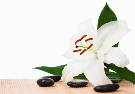 White hibiscus surrounded by black stones Stock Photo - 10069613