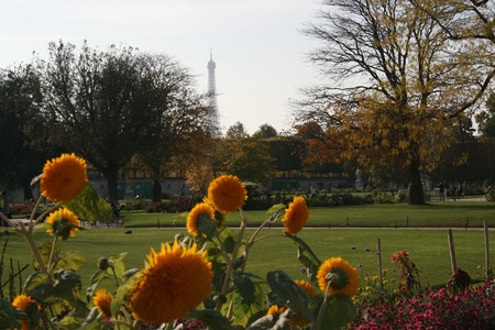 Flowers in a park photo