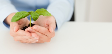 Woman holding a little plant in her hands photo