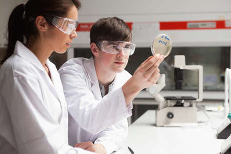 Serious students in science looking at a Petri dish in a laboratory photo