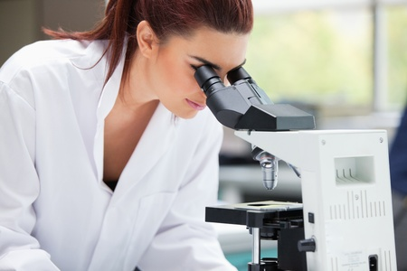 Scientist looking into a microscope in a laboratory photo