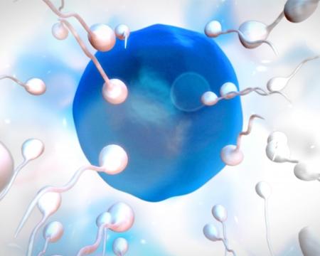 esperma: Huevo azul que es feritlized en blanco backgroun