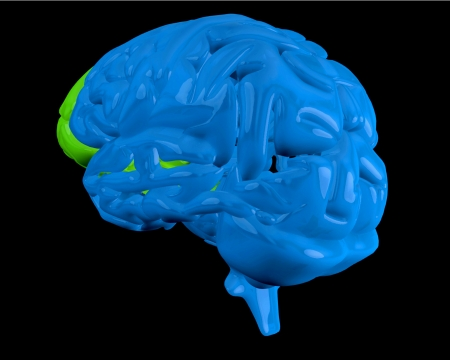 frontal lobe: Blue with highlighted green frontal lobe on black background Stock Photo