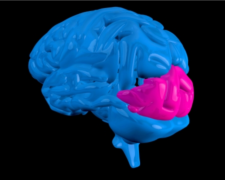 Blue brain with highlighted pink occipital lobe on black background