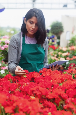 Woman holding a tablet while checking flowers in garden centre photo
