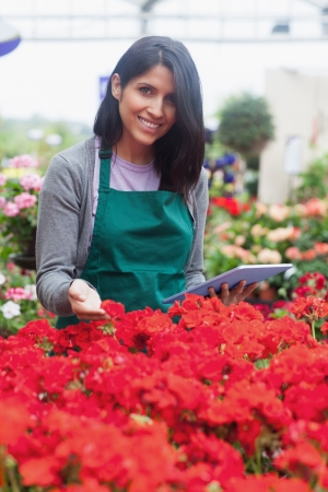 Garden center worker looking at red flowers with tablet in garden centre photo