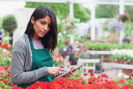 Employee checking red flowers with tablet pc in garden center thougtfully photo