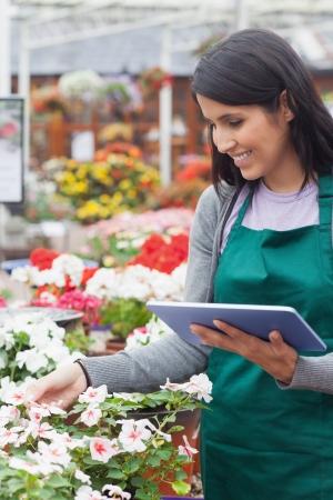 garden center: Emplyee choosing white flowers with tablet pc in garden center