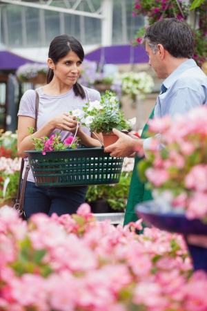 Woman with basket buying plants in garden centre photo