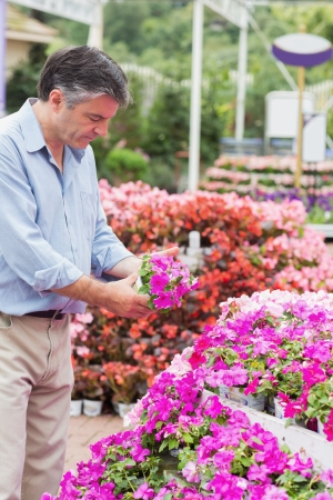 Man taking a flower in the garden centre Stock Photo - 16078811