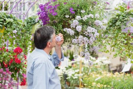 hanging basket: Man smelling flower from hanging basket in the garden Stock Photo