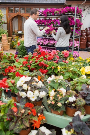 garden center: Couple choosing purple flowers in garden center