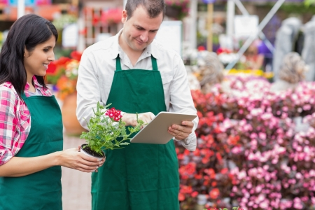 Garden center workers using tablet pc to check flowers in garden center photo