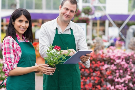 Two employees doing inventory in garden centre wth tablet pc photo