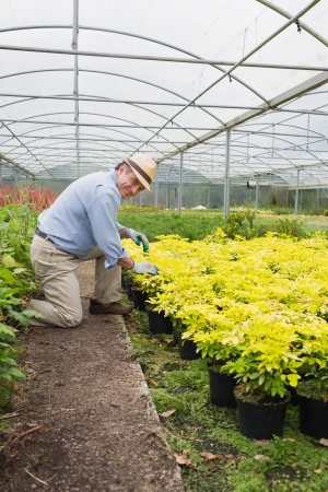 tending: Garderner smiling while tending to plants in greenhouse Stock Photo