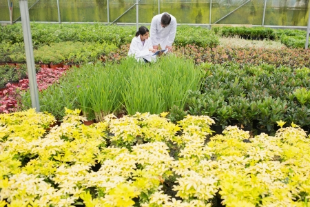 plant nursery: Two people in lab coats checking the plants in a greenhouse