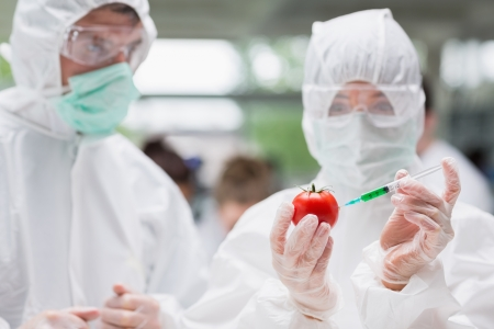 Student injecting tomato with green liquid in lab as another is watching wearing protective suits photo