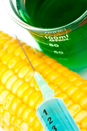 Corn next to a beaker against a white background Stock Photo - 16204547
