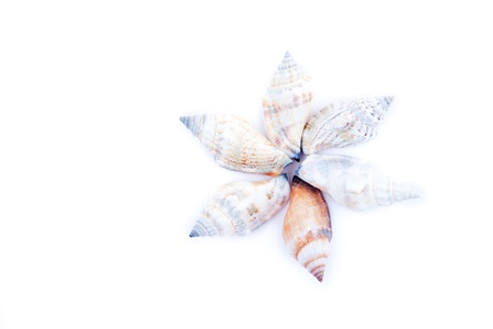 assemblage: Six shellfishes forming a circle against a white background Stock Photo