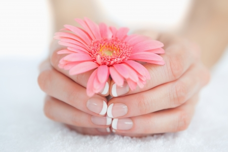 manicured hands: Close-up of french manicured hands holding flower at spa center Stock Photo