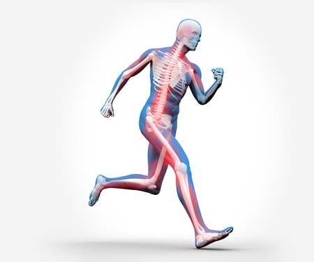 Blue and red digital skeleton running against a white background Stock Photo - 18116058