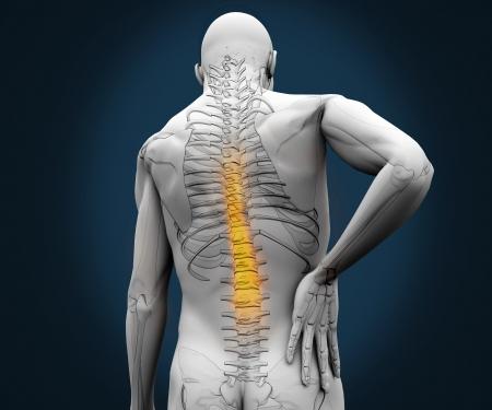 back ache: Digital skeleton having pain on his back against a blue background