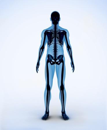 Black and blue digital skeleton body Stock Photo - 18116106